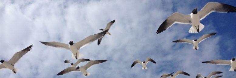 sean- birds cropped